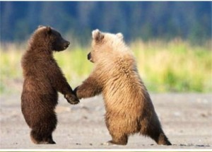 bear holding hands