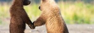 bear holding hands